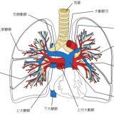 肺血流シンチ、肺換気シンチの役割と仕組み