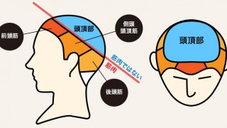 頭頂部には頭頂部専用の育毛剤!MSTT1がなぜ効くのか??
